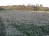przyjme grunty rolne w dzierzawe