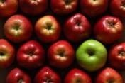 Zlecę cięcie drzewek jabłoni