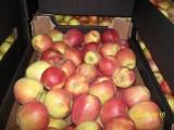 sprzedam jabłka idared/teleskop