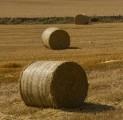PRACA: obsługa maszyn rolniczych (dolnośląskie)
