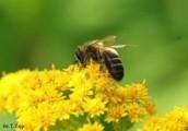 Zawiozę pszczoły na plantacje -max 60km od Siedlec