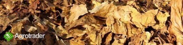 Liście tytoniu - IMPORT- Najlepsze i najtańsze!!!