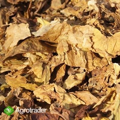 Liście tytoniu - IMPORT- Najlepsze i najtańsze!!! - zdjęcie 1