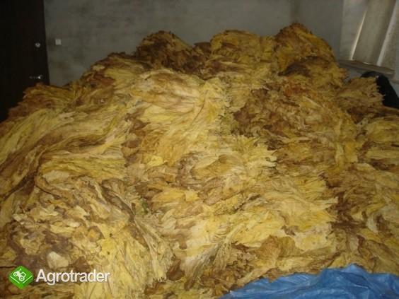 Liście tytoniu VIRGINIA, BURLEY najwyższa jakość - zdjęcie 1