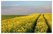 Ziemia rolna 228 hektarów ZachodnioPomorskie