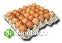 Sprzedam jaja M