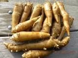 Topinambur - bulwy i sadzonki słonecznika bulwiast