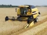 usługi zbioru rzepaku zbóż kukurydzy