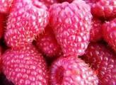 Sprzedam owoce maliny