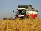 Ukraina.Grunty rolne na cele energetyczne /paszowe