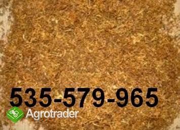 TYTOŃ 75zł/kg tel. 535-579-965