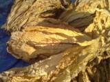 tytoń liście  virginia,królewsk, barlej od18zł/kg