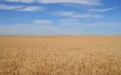 ziemia rolna, ziemia orna 480 h , gospodarstwo