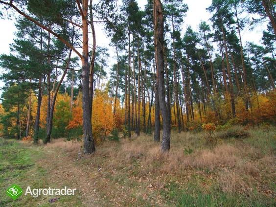 30 ha, Biskupice koło Sycowa, dolnośląskie - zdjęcie 6