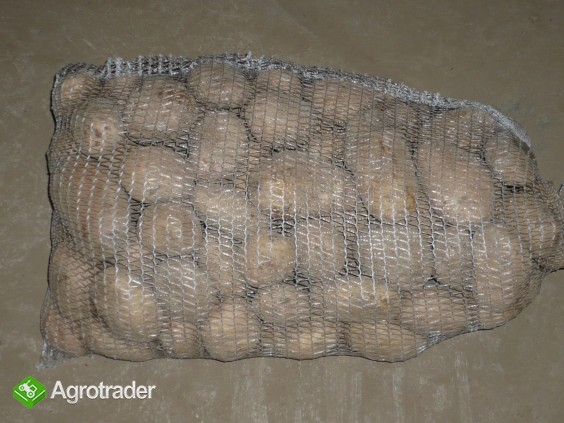 Sprzedam ziemniaki jadalne - zdjęcie 1