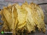 Liscie tytoniuVirginia,BArley,HAnd Strips Virginia15-19 złkg- 4t.