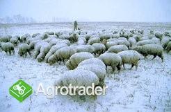 Ukraina.Sprzedam PGR 1000ha w jednym areale,dzialki rolno-lesne
