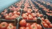 Sprzedam pomidory szklarniowe na export