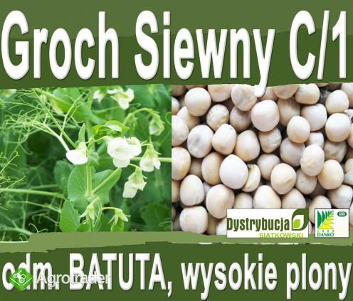 Kwalifikowane nasiona siewne grochu siewnego odm. BATUTA C/1