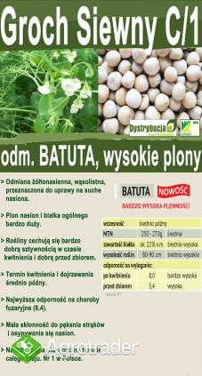 Kwalifikowane nasiona siewne grochu siewnego odm. BATUTA C/1 - zdjęcie 5