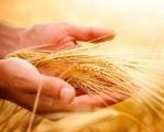 Kredyty dla rolników