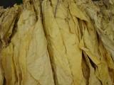 tytoń jasny i ciemny liście tytoniu, doskonaly smak.
