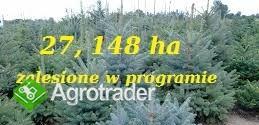 27, 148 ha zalesione w programie do 2025 roku sprzedam