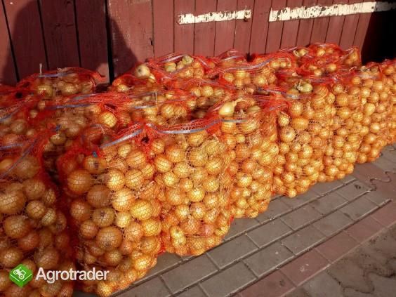 Cebulę sprzedam