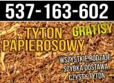 Świetny tytoń papierosowy w atrakcyjnej cenie tylko 60zł/kg Wysyłka 24