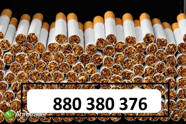 extra tytoń import! korsarz lm ld tyton marlboro