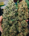 High Grade Medical Marijuana Sativa and Indica