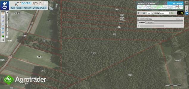 Las 4,13 ha, Bandysie, mazowieckie