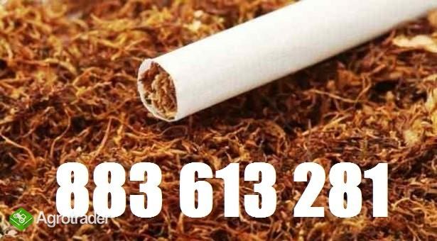70zł Tani tyton Korsarz, tyton Marlboro, tyton Camel i inne marki