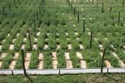 Ukraina. Srodki ochrony roslin, zaprawy pasz. Nasiona, nawozy,artykuly