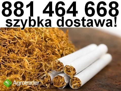 Tyton do nabijania w gilzy. Tani tytoń papierosowy świetniej jakości!
