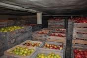 sprzedam jablka Eliza, Gloster, Idared,Champion