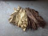 Tytoń Liście