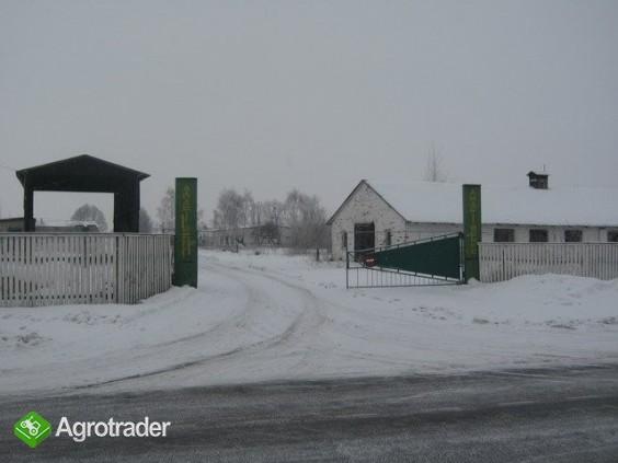Ukraina.Gospodarstwo rolne,ferma trzody chlewnej - zdjęcie 1