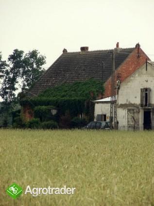 ferma drobiu kurnik - zdjęcie 2