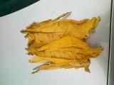 Liście tytoniu -25zł