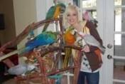 Ary, kakadu, afryki szarości i inne papugi dostęp