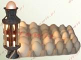 Owoskop Lampa do kontroli jaj lęgowych