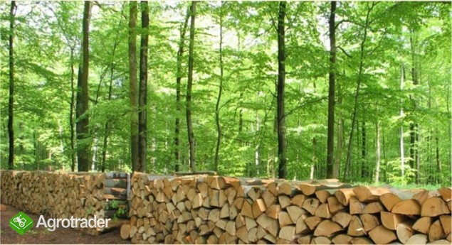 Ukraina.Gospodarstwa i grunty rolne,lesne.Tanio