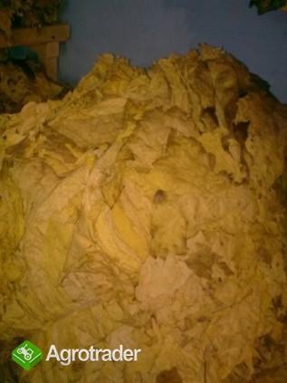 smaczne liście tytoniu- tytoń - zdjęcie 1